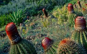 park-cactus