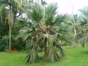 st. john palm trees