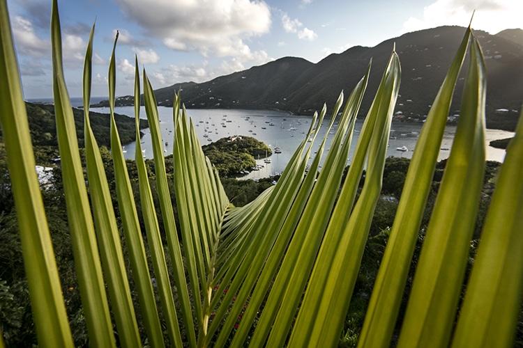 st john Coral Bay Thru Palm