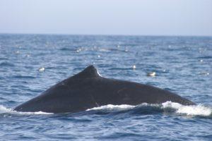 st. john whales