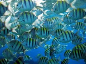 st. john tropical fish