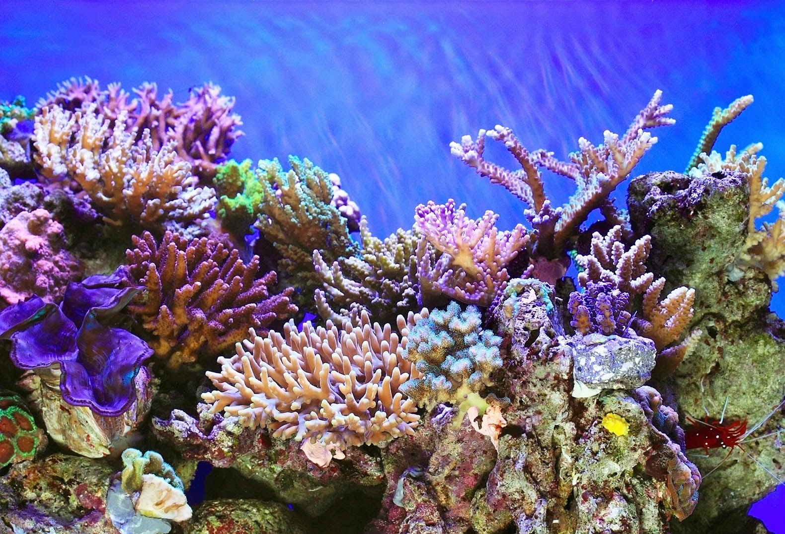 why coral reefs need to be We as people should protect coral reefs because, as in my text book, if we don't have coral reefs, it would change the movement of the ocean if we got rid of all coral reefs, it would kill .