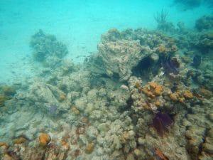 damaged star coral