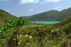 banana cabana view