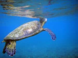 st. john turtles